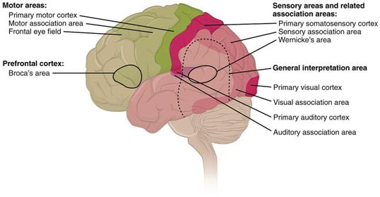 Brain Tumour Trials get an Adaptive Approach